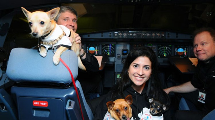 Virgin America pilots welcome Rebecca Katz of San Francisco's Animal Care and Control and Chihuahua pups being flown to New York so they can be adopted as part of Operation Chihuahua airlift.