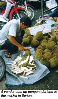 MALAY-durians