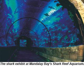 Mandalay Bay 39 S Shark Reef Marks 10 Years On Strip Travel