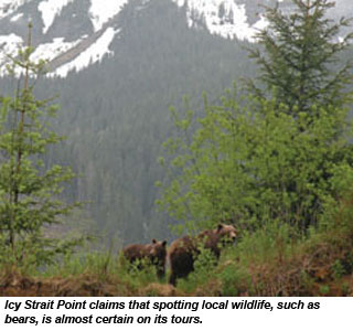 Icy Strait Point bears