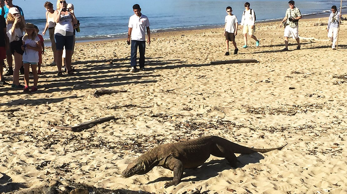 This Komodo Dragon was strolling the beach on Komodo Island shortly after our Star Clipper tour group arrived.